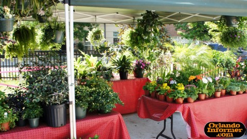 Orlando's Farmers Market at Lake Eola: Plants for sale.