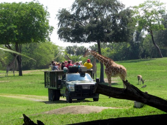Animal encounters at Busch Gardens Tampa Bay.