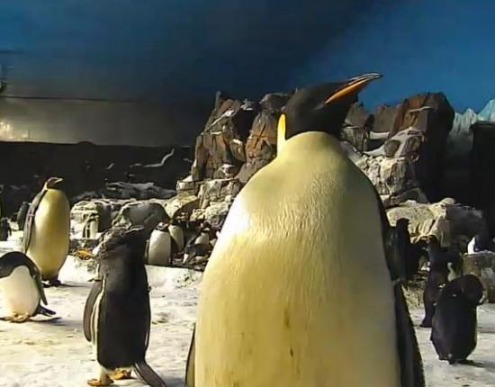 SeaWorld's Penguin Cam.