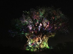 The Tree of - Nighttime Awakenings Disney's Animal Kingdom