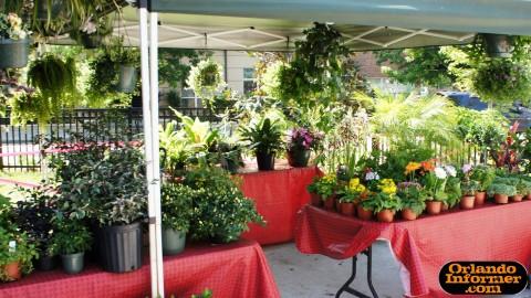 Orlando's Farmers Market at Lake Eola: Plants for sale.