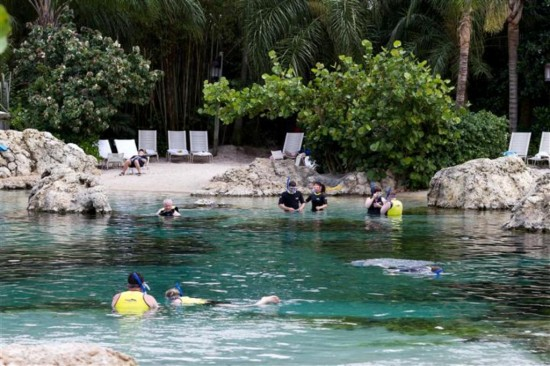 Discovery Cove Orlando: Look into the reef.