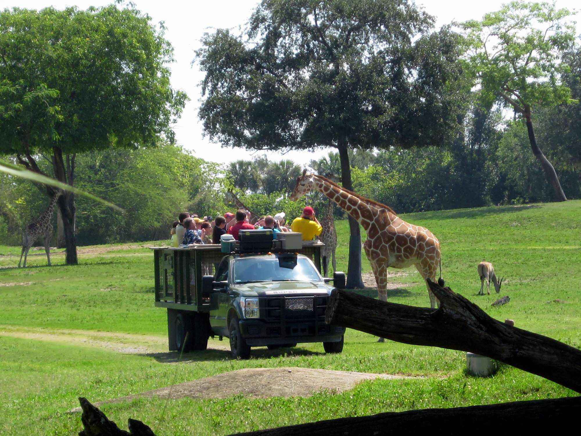 Animal encounters at Busch Gardens Tampa Bay