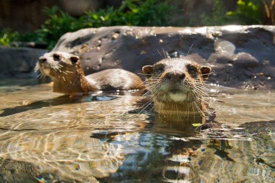 Freshwater Oasis now open at Discovery Cove in Orlando.