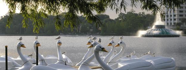 Swan Boat Rentals of Lake Eola