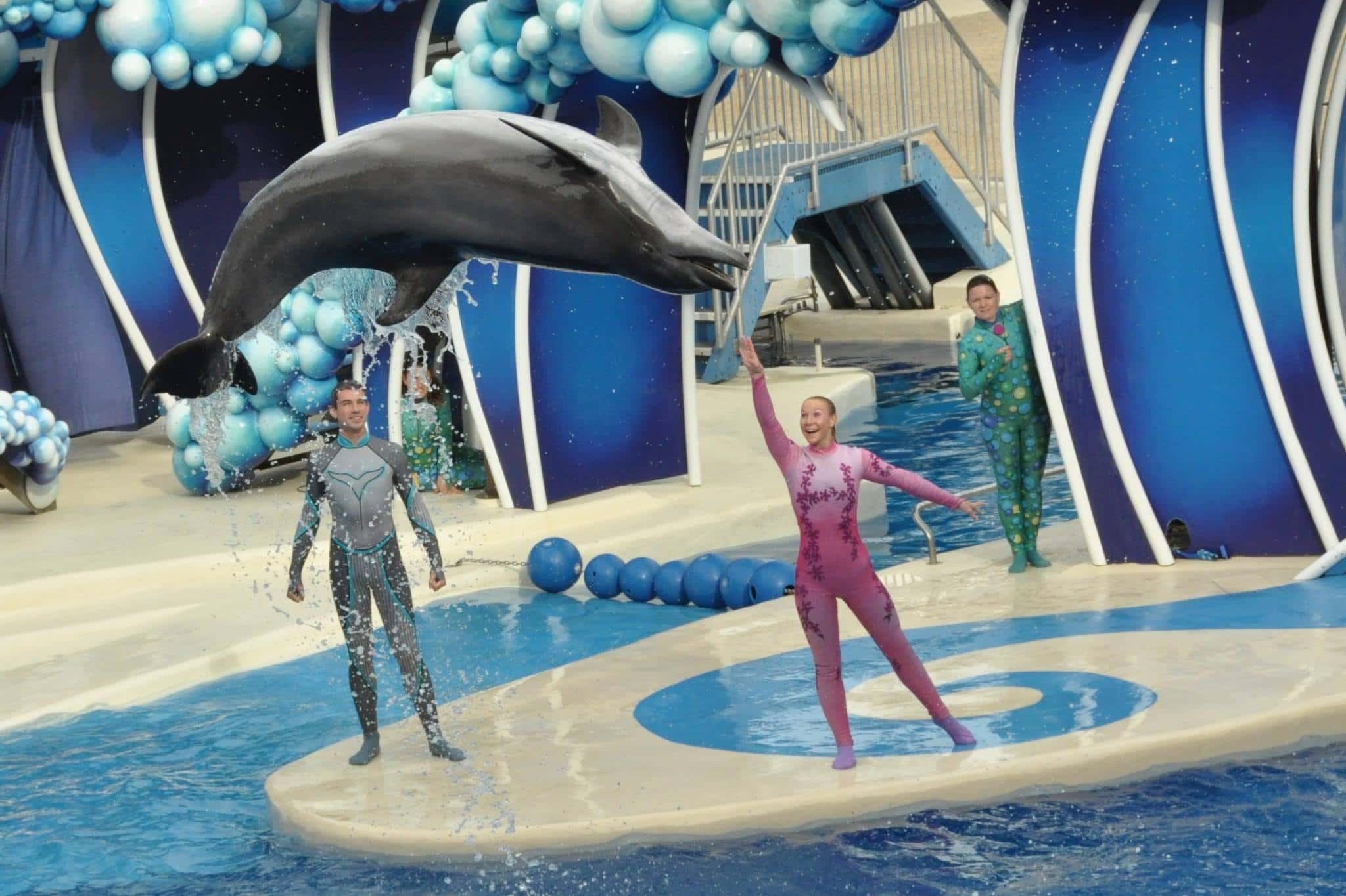 "SeaWorld Orlando announces new ""Dolphin Days"" show"